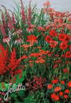 Perennial Mix red colors, medium, 30-80 cm Portion(s)
