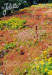 Standard Sedum Mix for Green Roofs Portion(s)